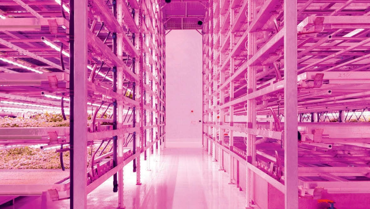 Future food: Commercial vertical farming in the UK