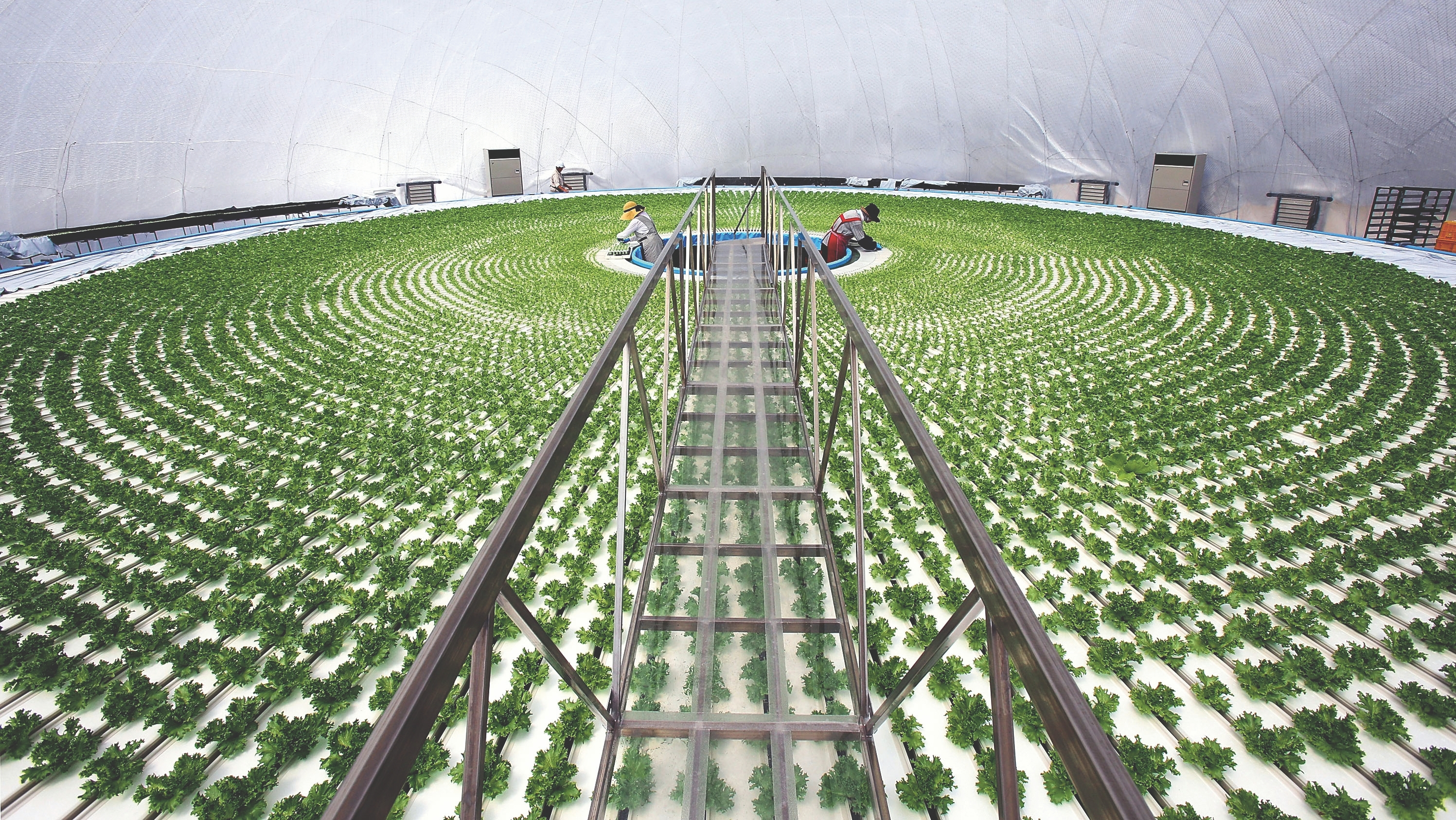 Deconstructed: urban farming